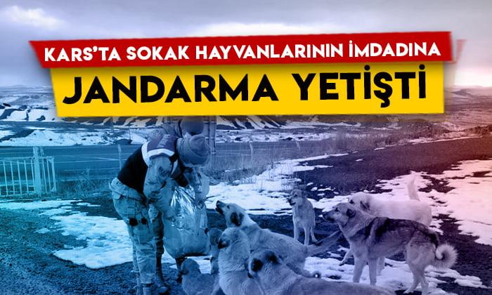 Susuz Çamçavuş köyünde sokak hayvanlarının imdadına Jandarma yetişti