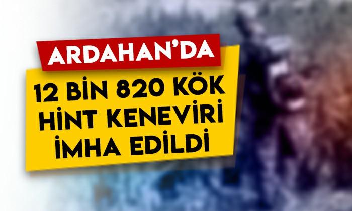 Ardahan'da 12 bin 820 kök Hint keneviri imha edildi